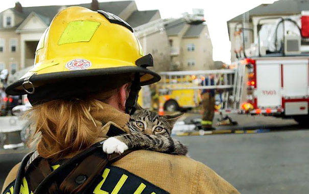 firefighters-rescuing-animals-saving-pets-vinegret (1)
