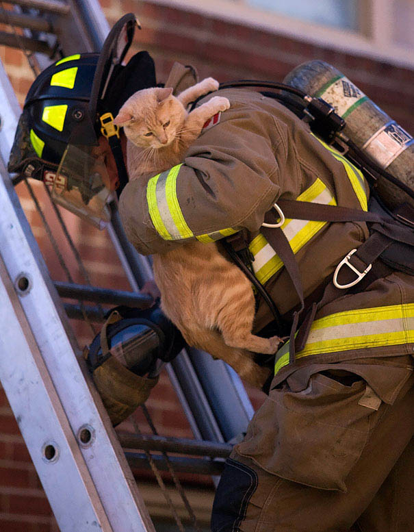 firefighters-rescuing-animals-saving-pets-vinegret (10)