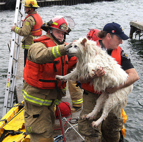 firefighters-rescuing-animals-saving-pets-vinegret (11)