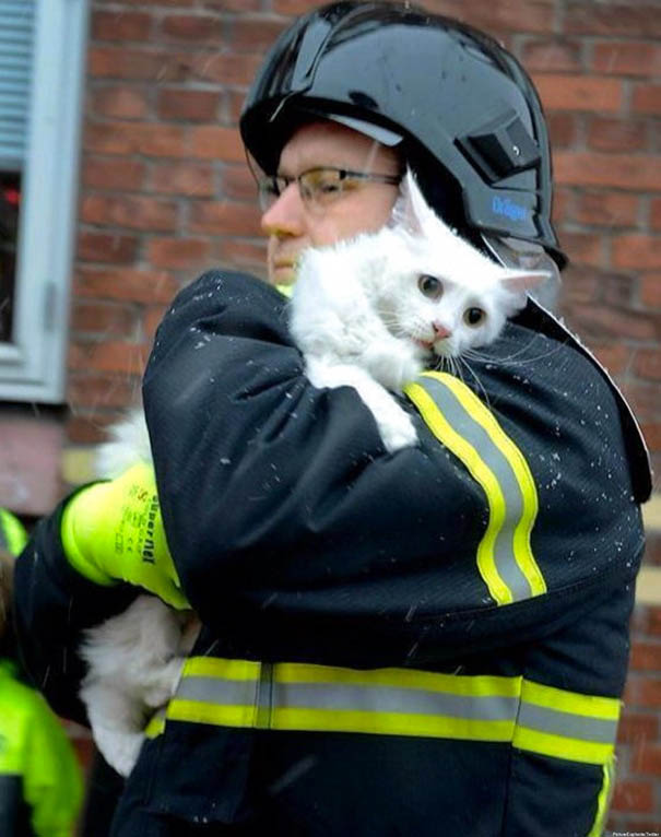 firefighters-rescuing-animals-saving-pets-vinegret (14)