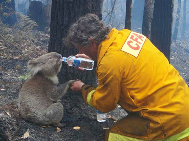 firefighters-rescuing-animals-saving-pets-vinegret (17)