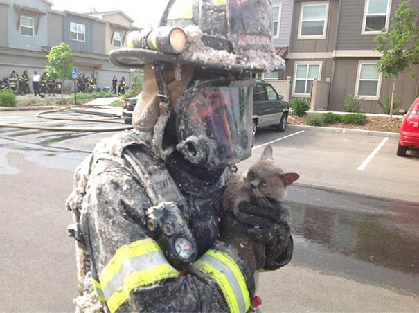 firefighters-rescuing-animals-saving-pets-vinegret (18)