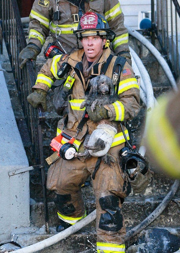 firefighters-rescuing-animals-saving-pets-vinegret (2)