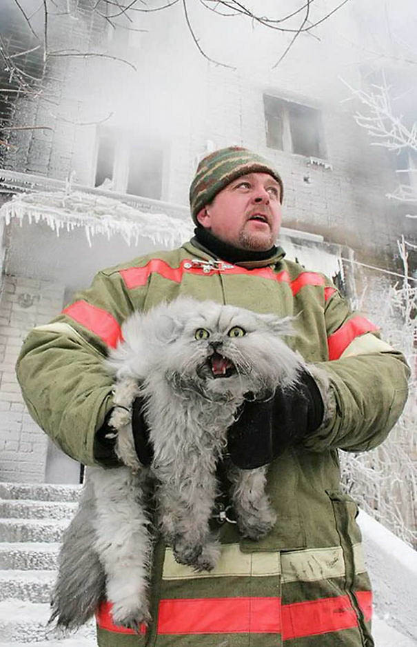 firefighters-rescuing-animals-saving-pets-vinegret (20)