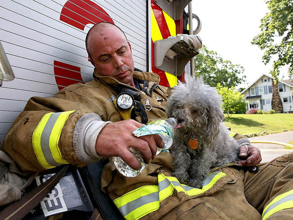 firefighters-rescuing-animals-saving-pets-vinegret (23)