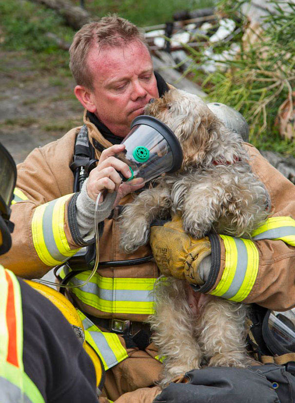firefighters-rescuing-animals-saving-pets-vinegret (3)
