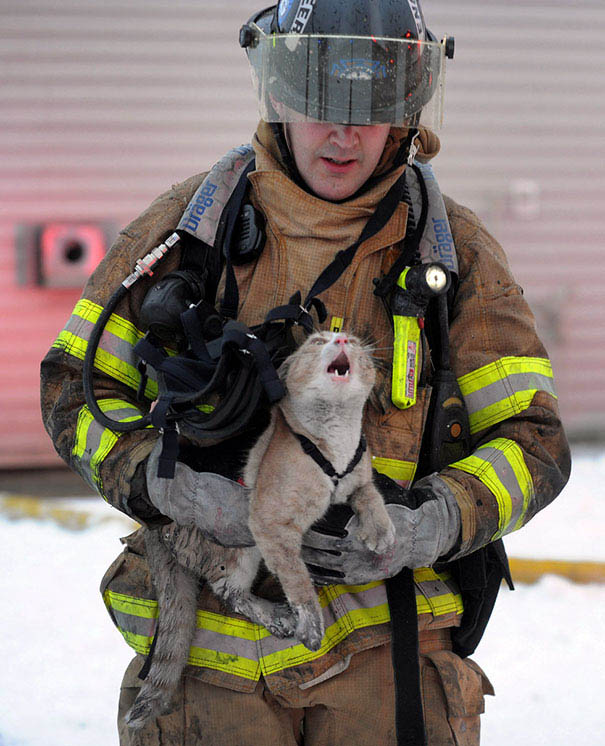 firefighters-rescuing-animals-saving-pets-vinegret (6)