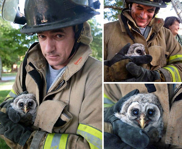 firefighters-rescuing-animals-saving-pets-vinegret (7)