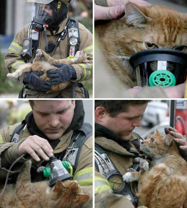 firefighters-rescuing-animals-saving-pets-vinegret (8)