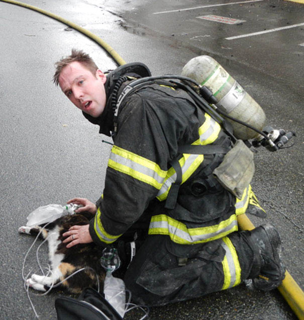 firefighters-rescuing-animals-saving-pets-vinegret (9)