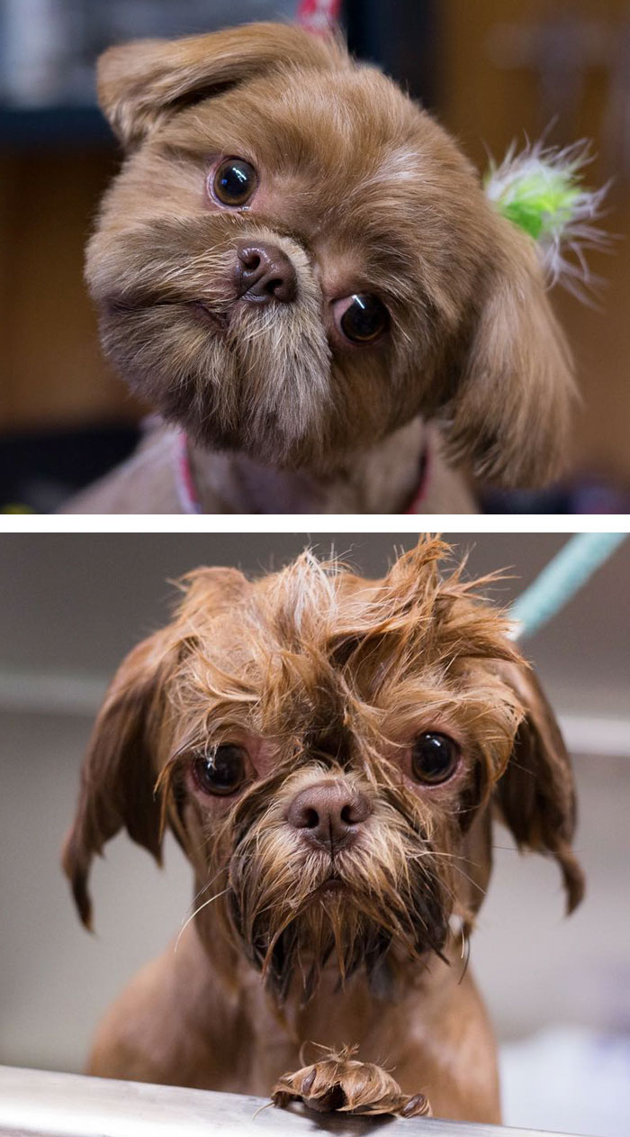 funny-wet-pets-before-after-bath-dogs-cats-vinegret (16)