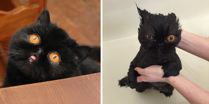 funny-wet-pets-before-after-bath-dogs-cats-vinegret (23)
