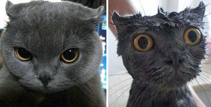 funny-wet-pets-before-after-bath-dogs-cats-vinegret (5)
