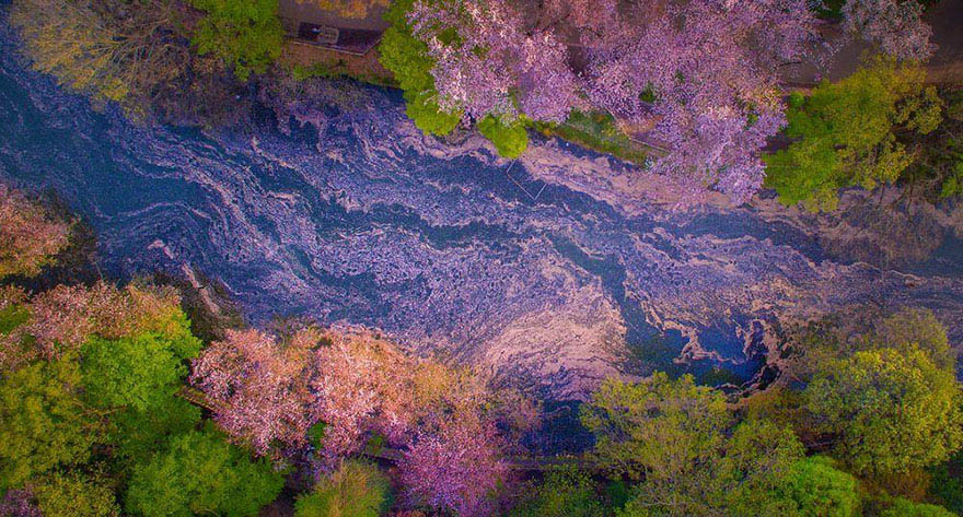 sakura-cherry-blossom-drone-photography-danilo-dungo-japan-vinegret (2)