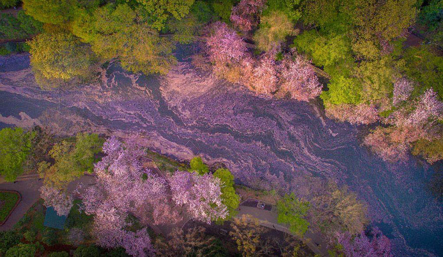 sakura-cherry-blossom-drone-photography-danilo-dungo-japan-vinegret (5)