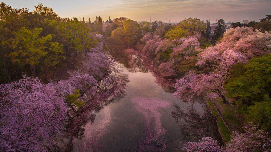 sakura-cherry-blossom-drone-photography-danilo-dungo-japan-vinegret (6)