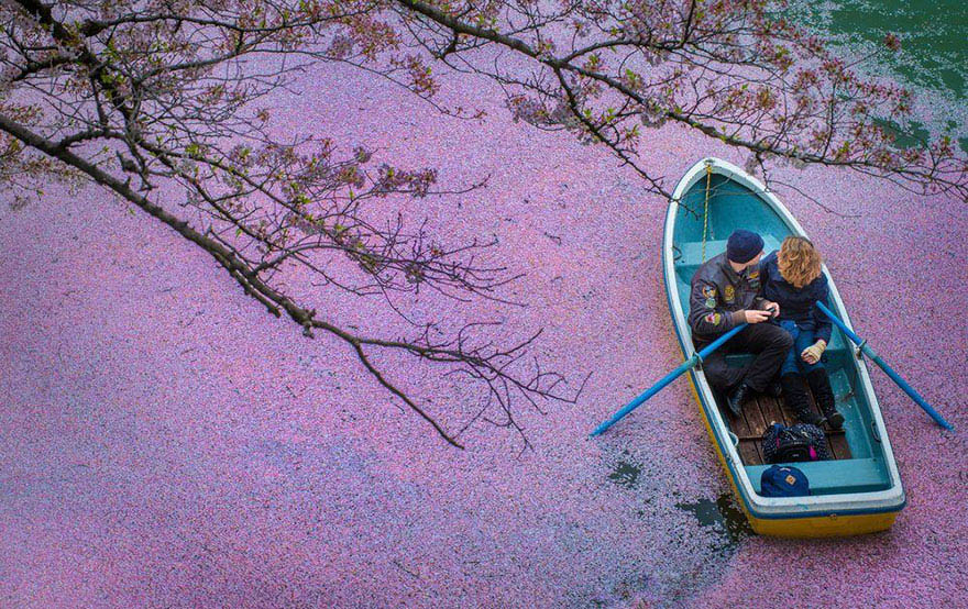 sakura-cherry-blossom-drone-photography-danilo-dungo-japan-vinegret (7)