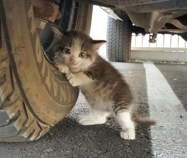 stray-kitten-found-under-truck-adopted-cat-axel-vinegret (1)