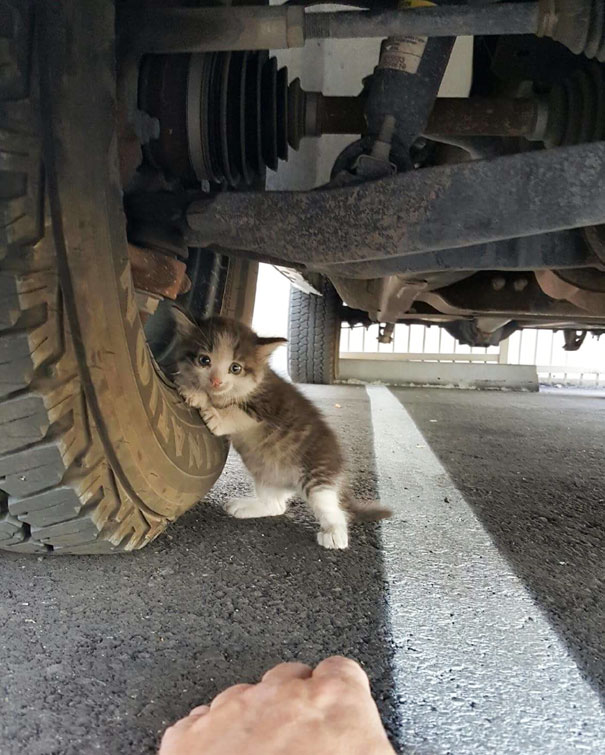 stray-kitten-found-under-truck-adopted-cat-axel-vinegret (5)