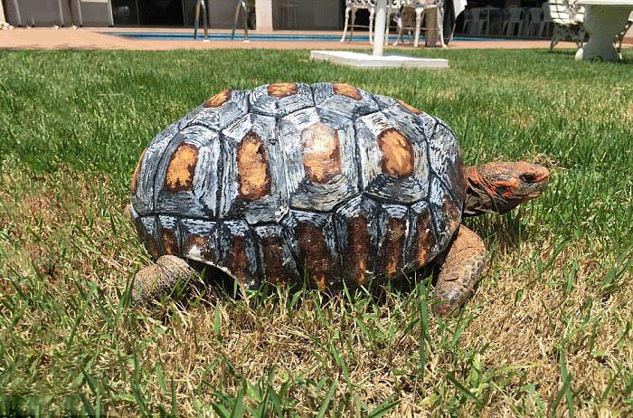 tortoise-3d-printed-shell-freddy-vinegret (5)