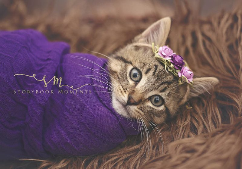adopted-cat-photoshoot-newborn-storybook-moments-vinegret (1)