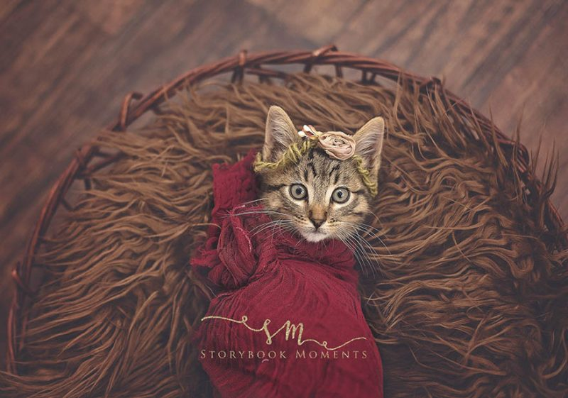 adopted-cat-photoshoot-newborn-storybook-moments-vinegret (2)