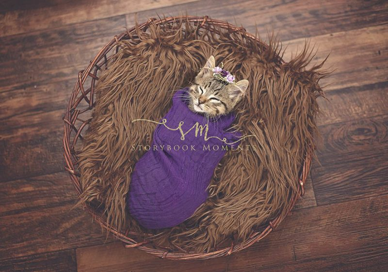 adopted-cat-photoshoot-newborn-storybook-moments-vinegret (3)