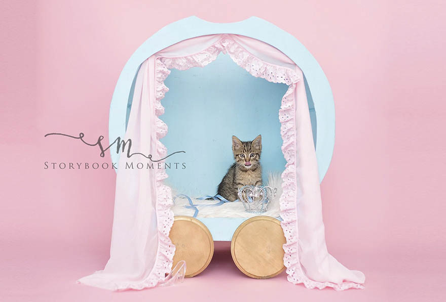 adopted-cat-photoshoot-newborn-storybook-moments-vinegret (5)