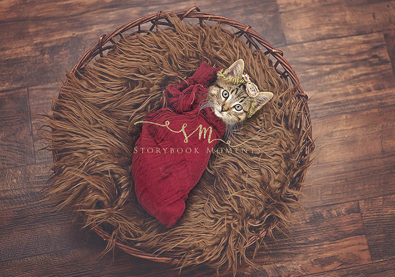 adopted-cat-photoshoot-newborn-storybook-moments-vinegret (6)