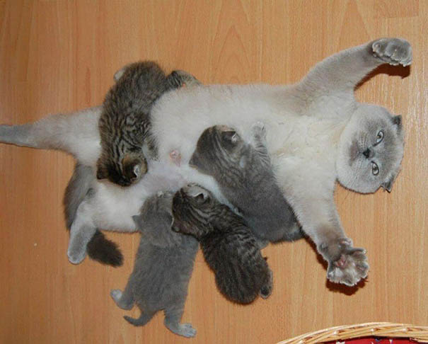 funny-animal-motherhood-photos-cats-dogs-pet-moms-vinegret (13)