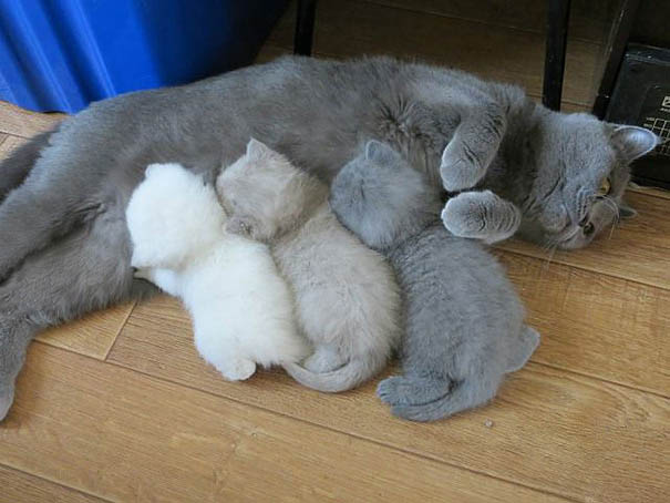 funny-animal-motherhood-photos-cats-dogs-pet-moms-vinegret (14)