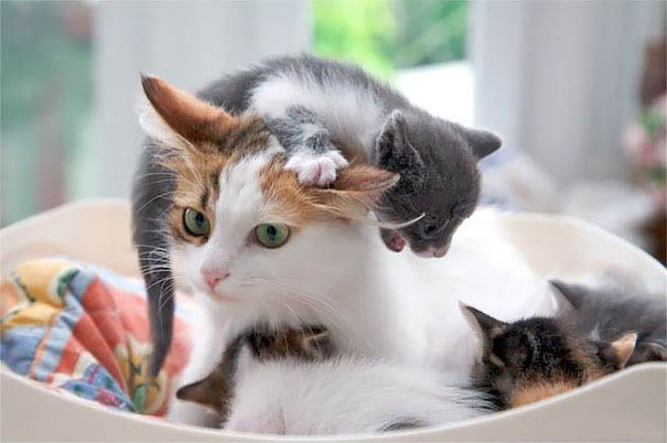 funny-animal-motherhood-photos-cats-dogs-pet-moms-vinegret (3)