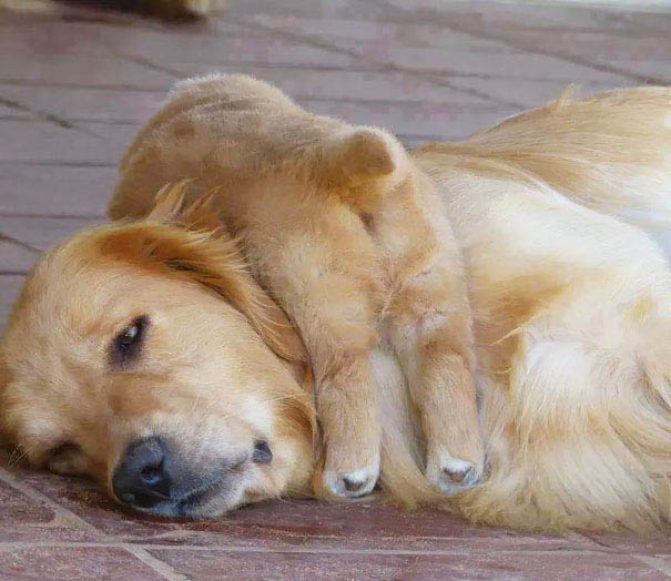 funny-animal-motherhood-photos-cats-dogs-pet-moms-vinegret (6)