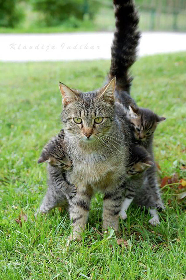 funny-animal-motherhood-photos-cats-dogs-pet-moms-vinegret (8)