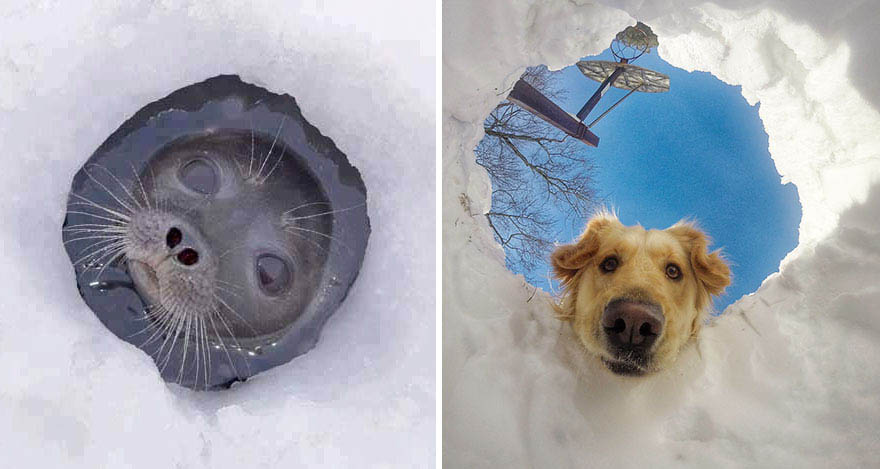 funny-seals-look-like-dogs-vinegret (11)