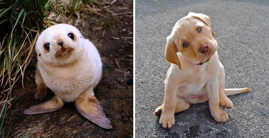 funny-seals-look-like-dogs-vinegret (14)