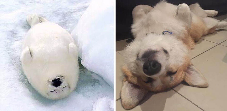 funny-seals-look-like-dogs-vinegret (18)