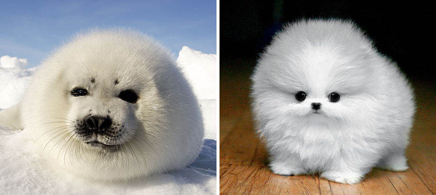 funny-seals-look-like-dogs-vinegret (19)