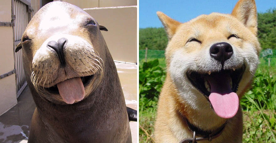 funny-seals-look-like-dogs-vinegret (2)