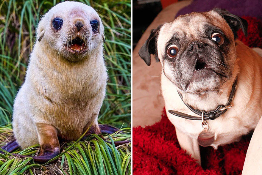 funny-seals-look-like-dogs-vinegret (20)