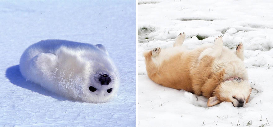 funny-seals-look-like-dogs-vinegret (21)
