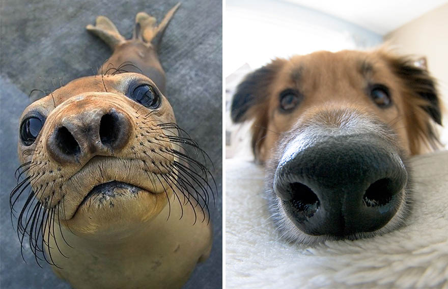 funny-seals-look-like-dogs-vinegret (25)