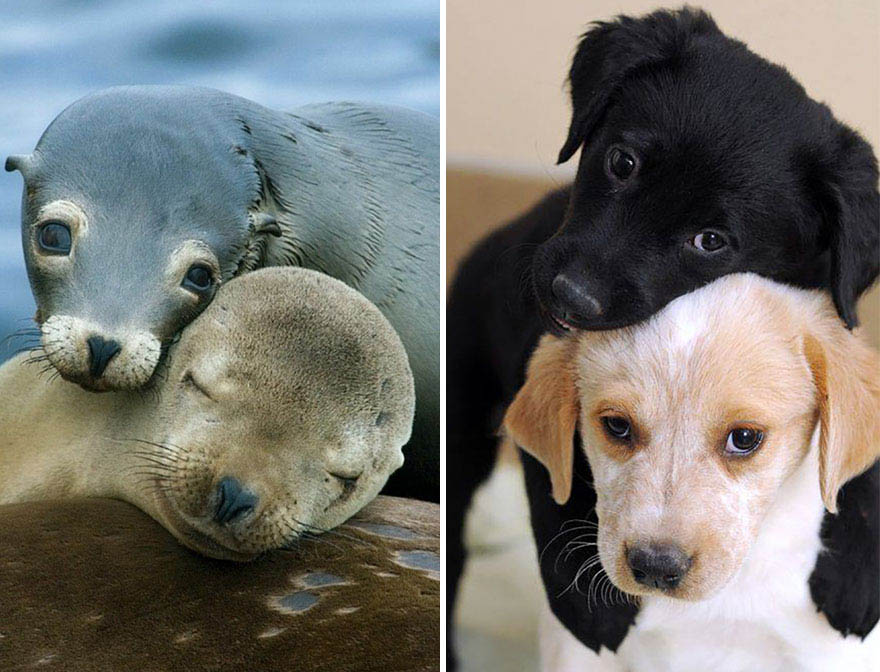 funny-seals-look-like-dogs-vinegret (3)