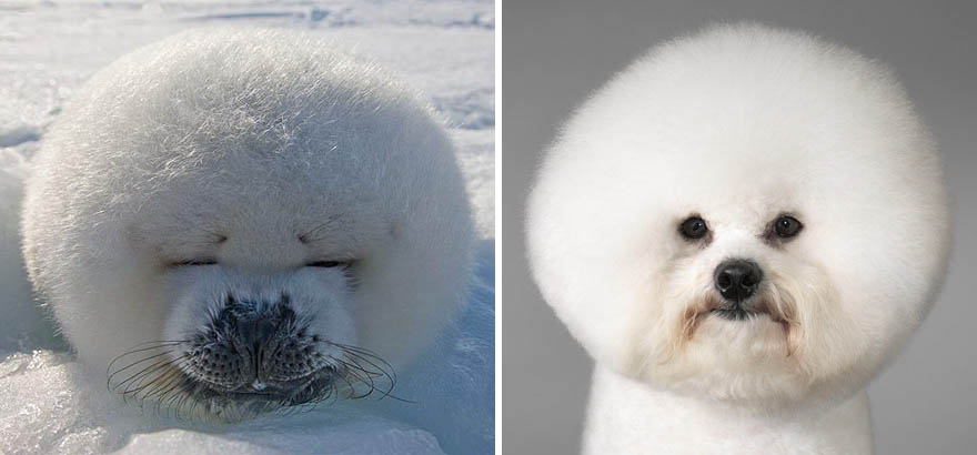 funny-seals-look-like-dogs-vinegret (4)