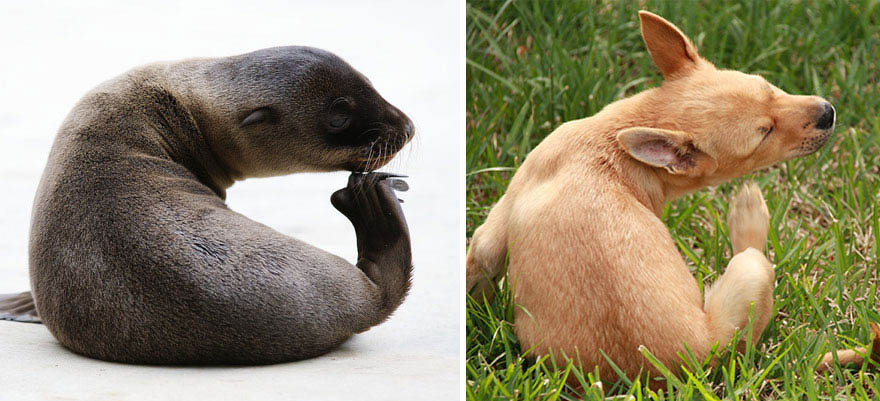 funny-seals-look-like-dogs-vinegret (5)