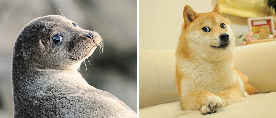 funny-seals-look-like-dogs-vinegret (6)