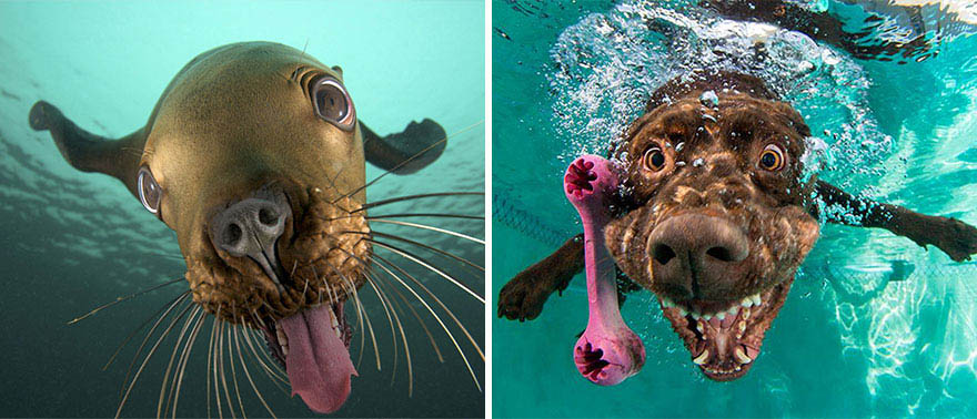 funny-seals-look-like-dogs-vinegret (7)
