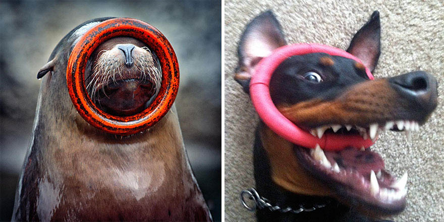 funny-seals-look-like-dogs-vinegret (8)