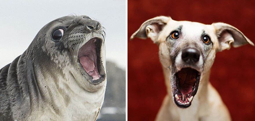 funny-seals-look-like-dogs-vinegret (9)