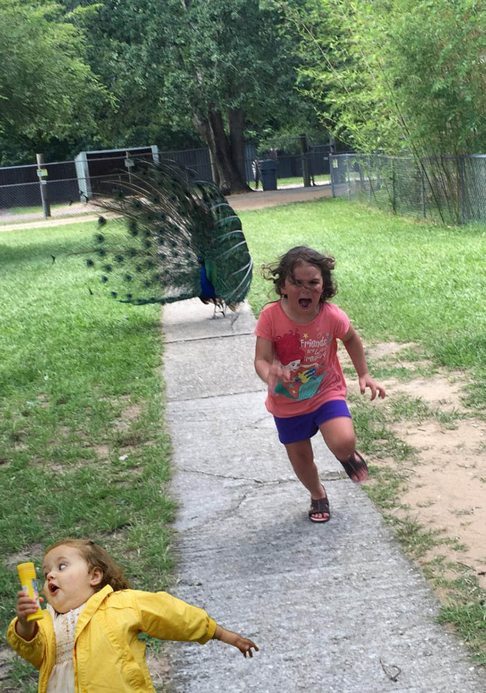 girl-running-from-peacock-photoshop-battle-vinegret (12)